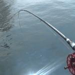 間違いやすい黒鯛ヘチ釣りの竿(ロッド)リール おすすめと選び方