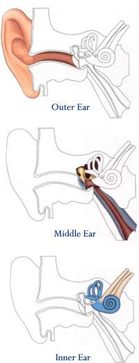 Ototronix Diagnostics - Ear Anatomy