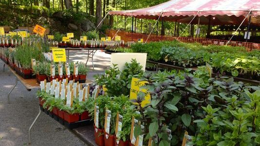 Plant Sale & Coffee Morning