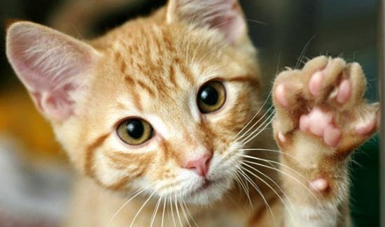 Что делать если кот съел отравленную мышь