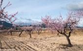 campos de Moratalla