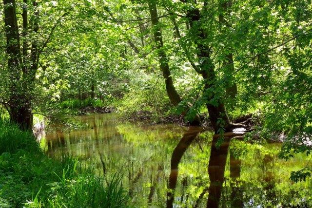 pigeon-creek