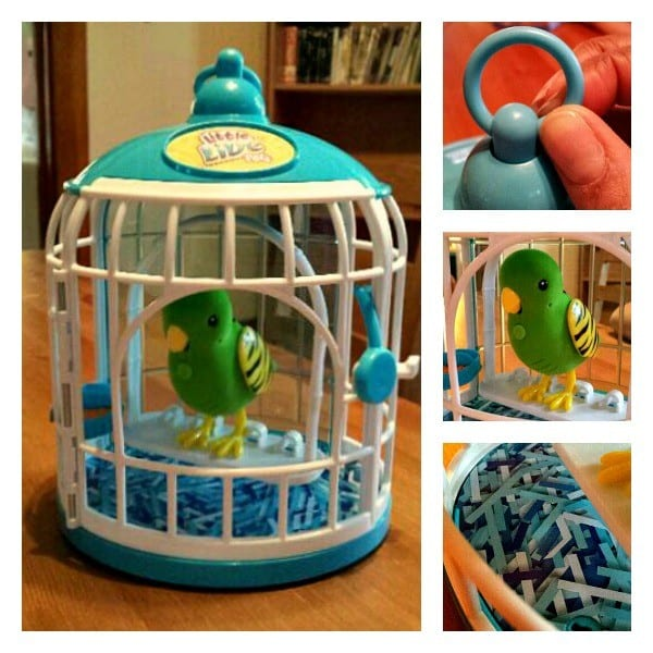 Bird Cage Collage
