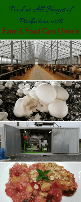 Food at All Stages of Production with Farm & Food Care Ontario