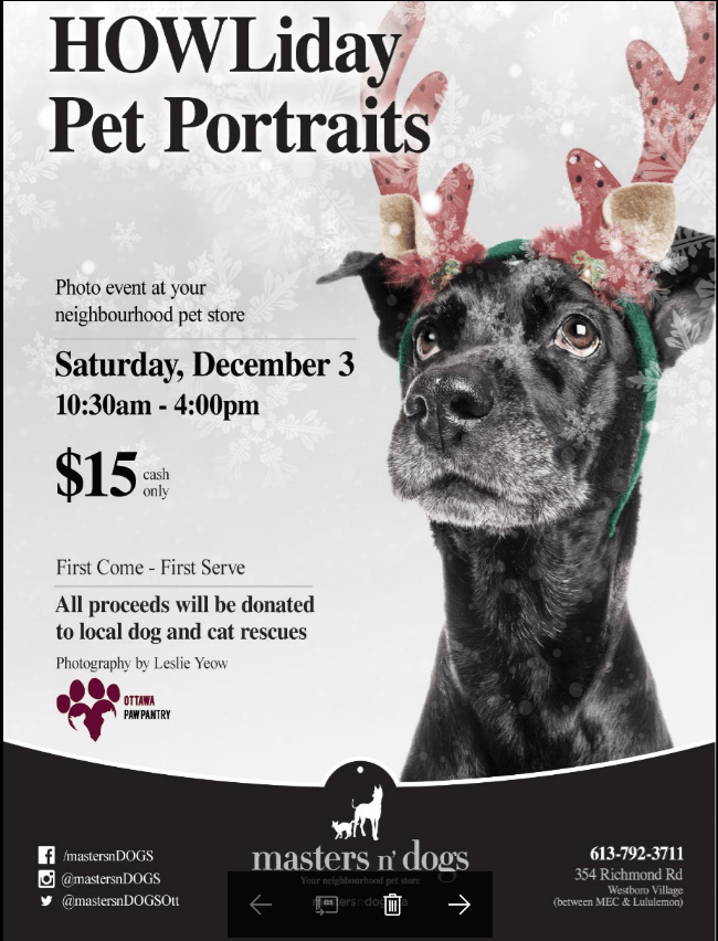 HOWLiday Pet Portraits