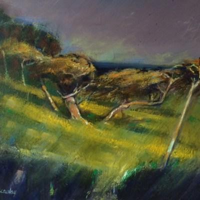 Windblasted Cypresses Oil on Canvas 60cm x 60cm