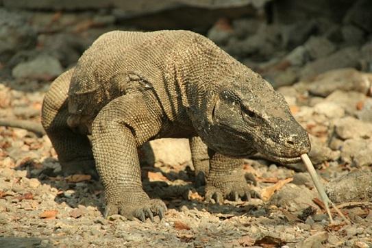 Dünyanın En Tehlikeli Ve ölümcül 10 Hayvanı Oturanbilge