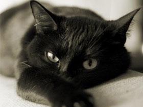 Как правильно кормить кошку. Расчесывание кошек и уход