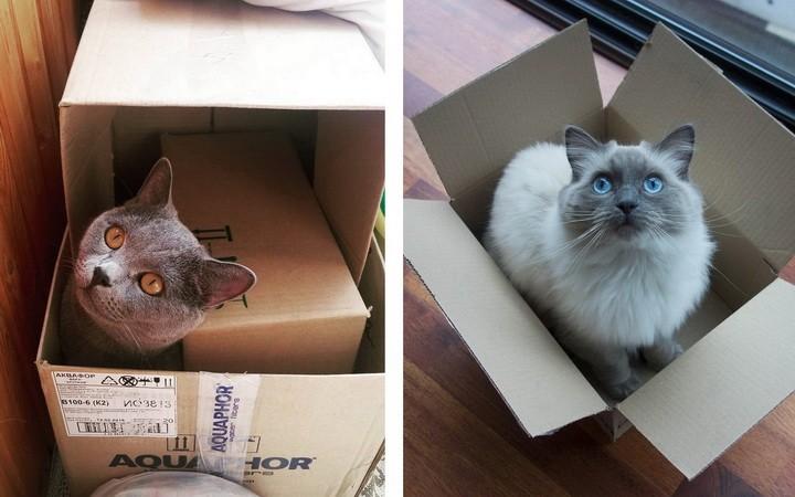 Veľký korisť Mačička lízanie