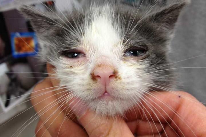 Почему кашляет и чихает кот