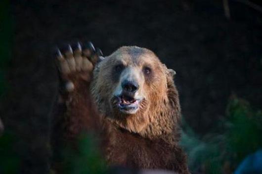 Медведь приветствует отдыхающих.