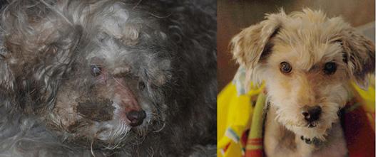 Хлоя даже не походила на собаку, когда её спасли.
