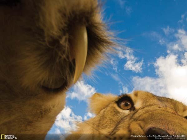 Последнее, что видят многие животные в своей жизни.