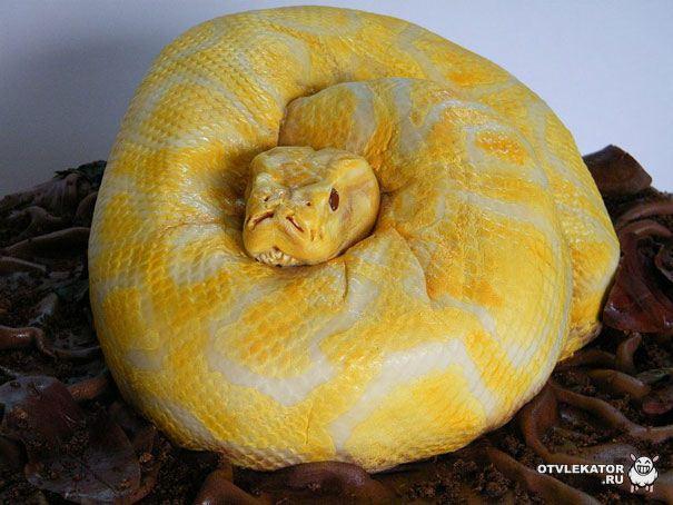 Торт «Змея»