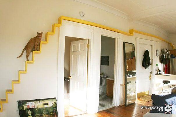полка для кошачих прогулок под потолком