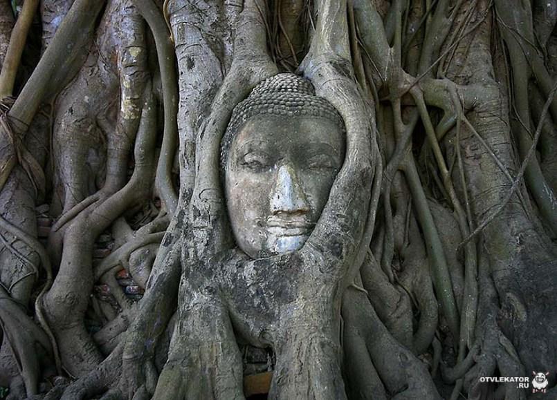 корни деревьев опутали древнюю статую