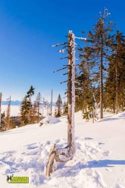 turbacz-rakiety-sniezne-2017-otwarty-horyzont-39