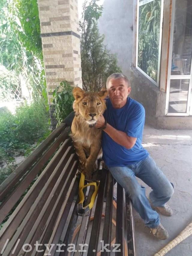 Домашний львенок в Шымкенте