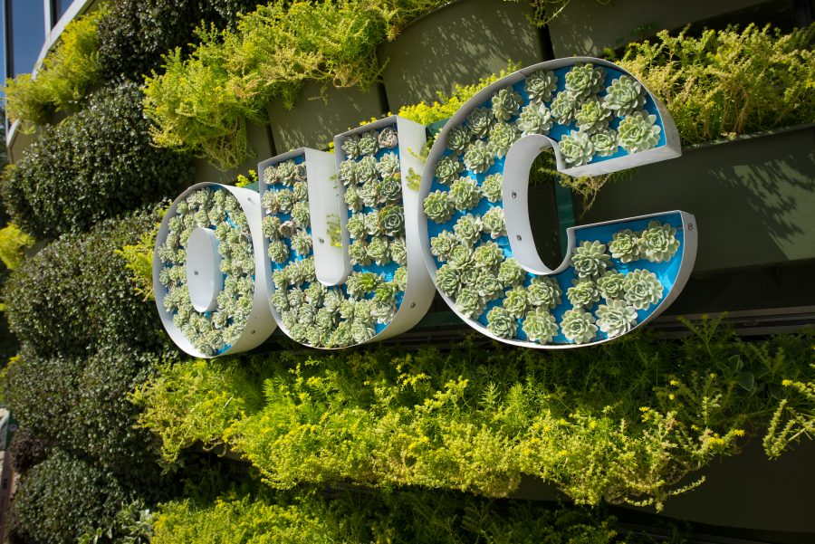 Living Wall and Rain Garden: Sustainable Wellness in Action