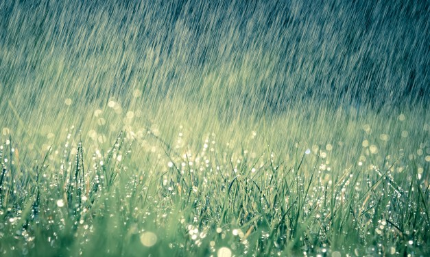 NO NEED FOR IRRIGATION WHEN SUMMER RAINS KEEP LAWNS GREEN