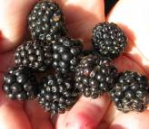 GSK & berries - A handful or two... more please oupa?
