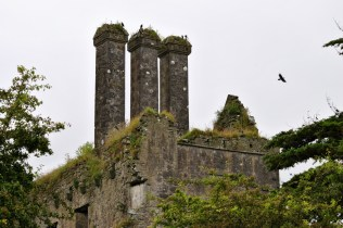 The rooks look well against the ruins... it's as if they belong together... sombre...