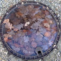 This striking collage of leaves was actually frozen into the top of a manhole cover... the ice must have been at least an inch thick. Imagine the suffering of the men in the trenches at the height of winter!