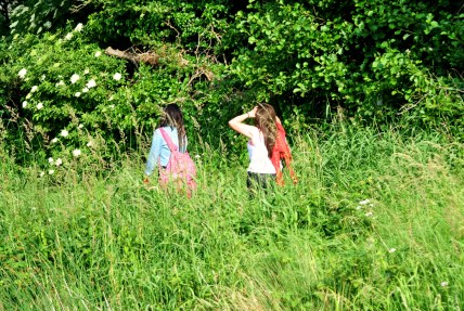 Freedom's just another walk... along the Royal Canal's towpath on a warm summer's day