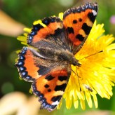 No self respecting gallery is complete without a butterfly...