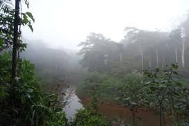 Jungle Pérou