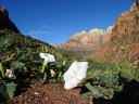 Zion National Park Utah, flowers as big as mountains!