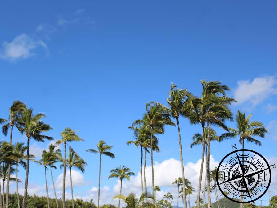 Wir lieben den Blick zu den Palmen <3