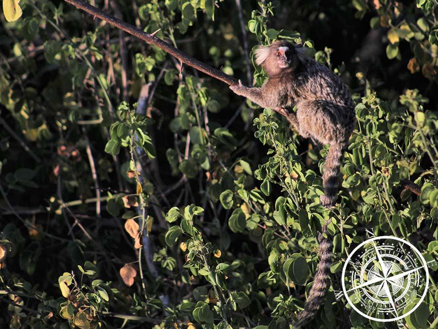 """Diesmal haben wir auch ein paar """"Marmosetten"""" Affen gesehen."""