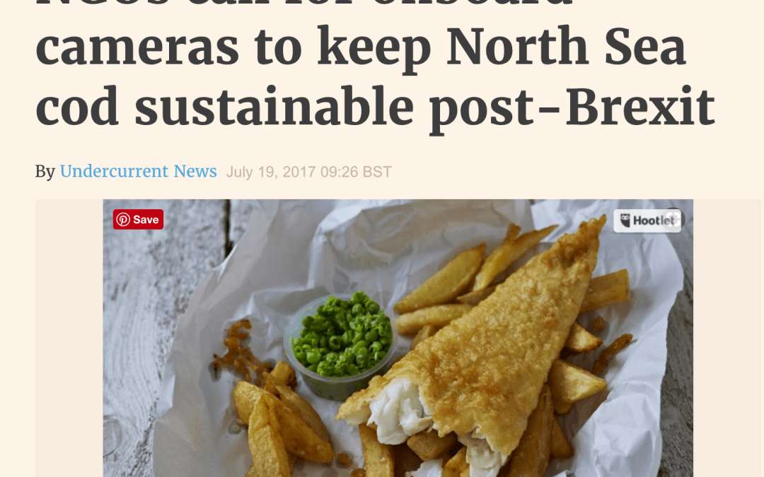 Undercurrent: NGOs call for onboard cameras to keep North Sea cod sustainable post-Brexit
