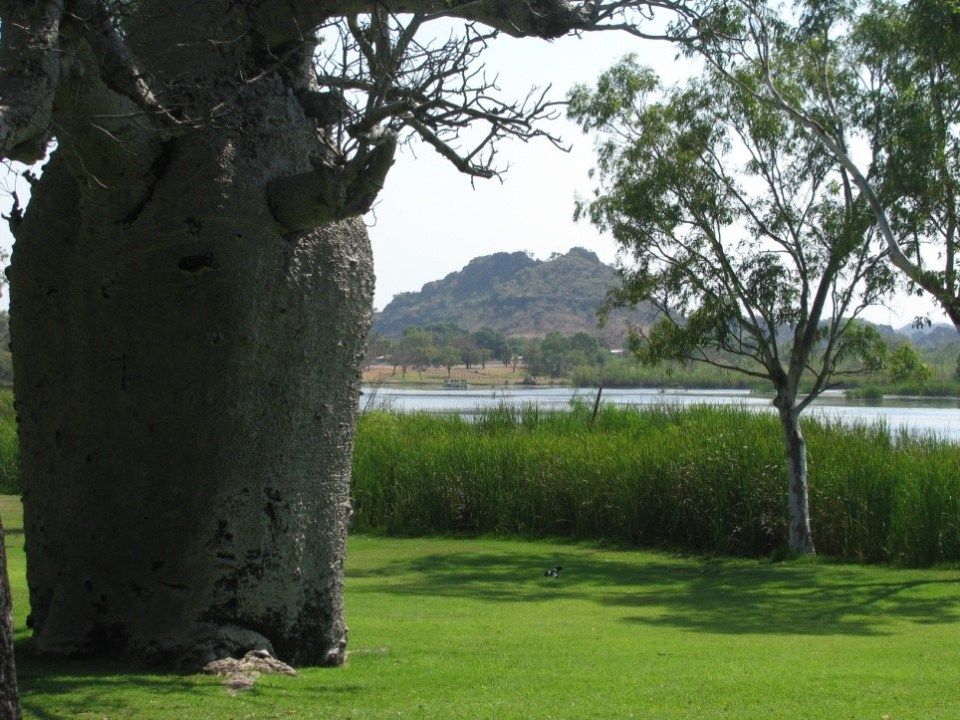 Celebrity Tree Park