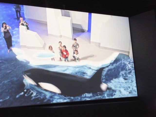 Life size orca!