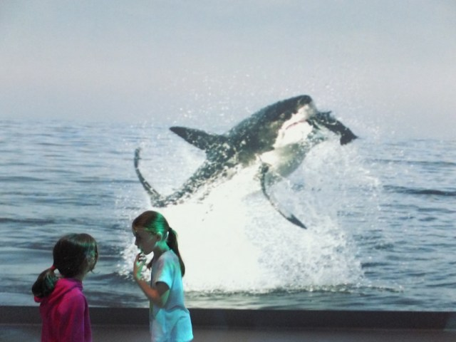 Nothing like a great white in your face! How big is that screen!