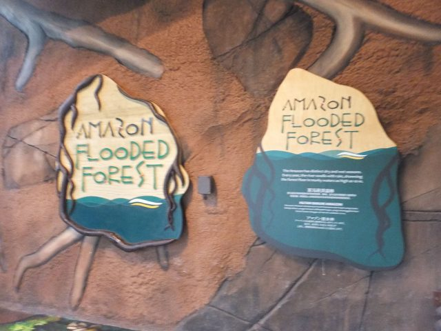 Flooded Amazon Exhibit