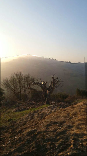 Fig looking downhill at new house construction site in Le Marche