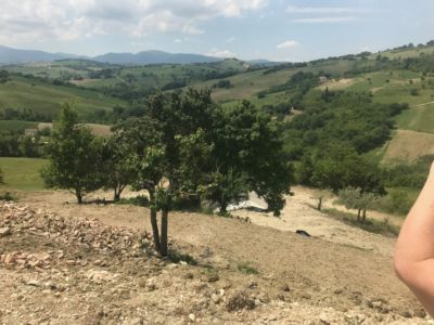 Pruned Cherry Looking Good  at site of a new house being built in Le Marche, Italy
