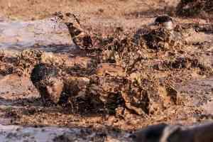 muddy building site in Le Marche
