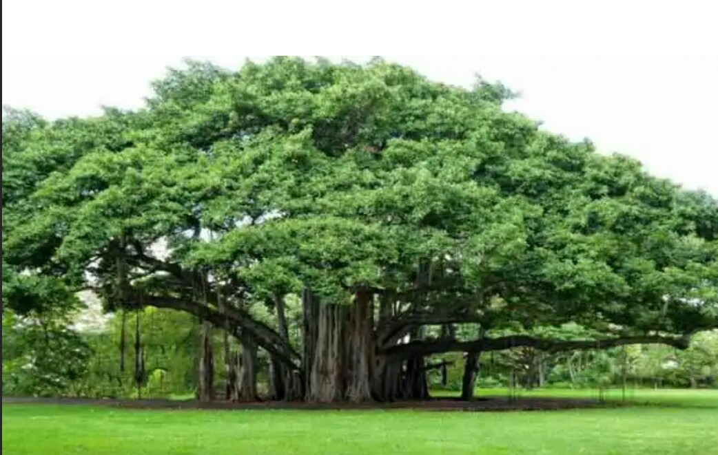 save tree . know how