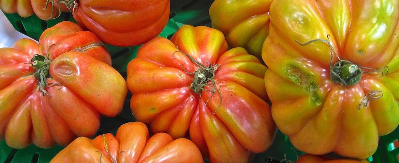 Tomatoes in Ferrara.