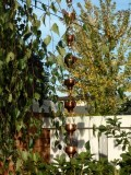 Detail of rain chain with weeping birch tree
