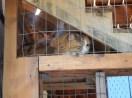 Ginger cat in catio