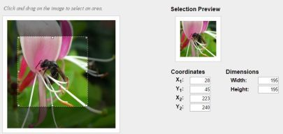 Image cropping with imgAreaSelect