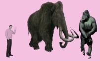 ice ape