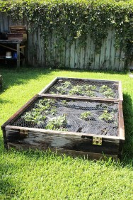 strawberry_raised_beds_with_lid