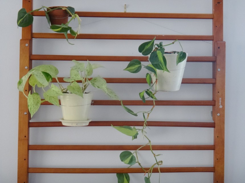 DIY Plant Hanger with Repurposed Baby Gates (13)