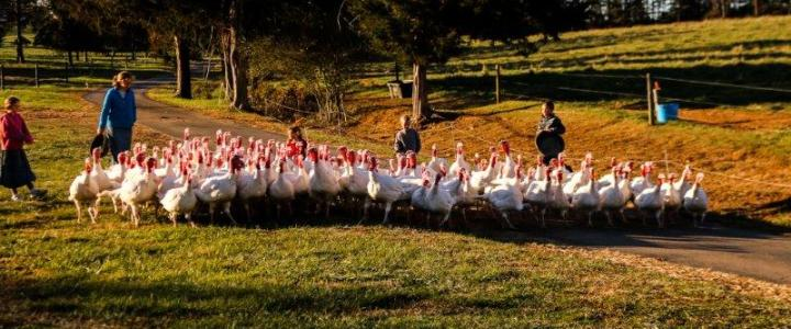 Turkey Reservations and Update